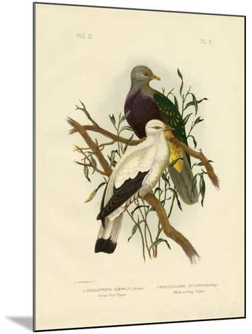 Allied Fruit Pigeon or Wompoo Fruit-Dove, 1891-Gracius Broinowski-Mounted Giclee Print