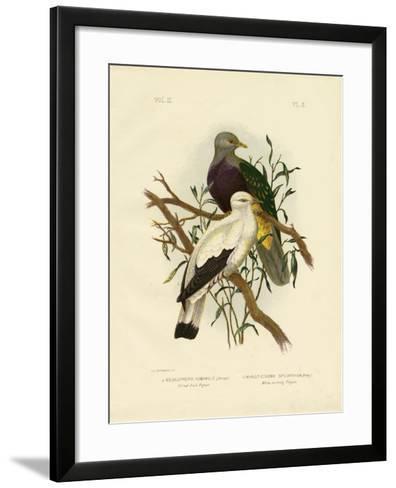 Allied Fruit Pigeon or Wompoo Fruit-Dove, 1891-Gracius Broinowski-Framed Art Print