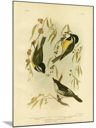 Frontal Shrike-Tit or Crested Shrike-Tit, 1891-Gracius Broinowski-Mounted Giclee Print