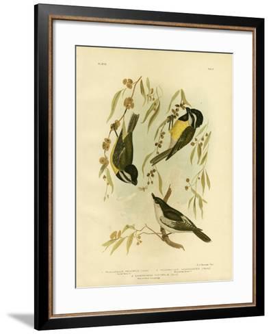 Frontal Shrike-Tit or Crested Shrike-Tit, 1891-Gracius Broinowski-Framed Art Print