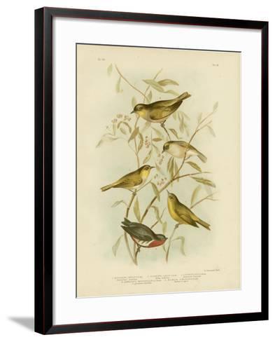 Grey-Backed Zosterops, 1891-Gracius Broinowski-Framed Art Print