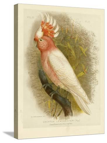 Leadbeater's Cockatoo, 1891-Gracius Broinowski-Stretched Canvas Print