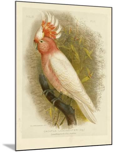 Leadbeater's Cockatoo, 1891-Gracius Broinowski-Mounted Giclee Print
