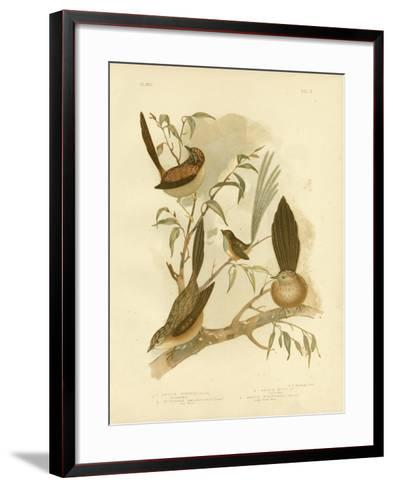 Striated Wren, 1891-Gracius Broinowski-Framed Art Print