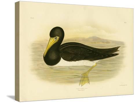 Brown Gannet, 1891-Gracius Broinowski-Stretched Canvas Print