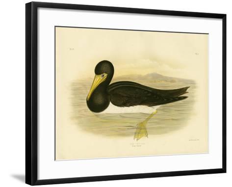 Brown Gannet, 1891-Gracius Broinowski-Framed Art Print