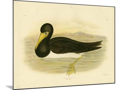 Brown Gannet, 1891-Gracius Broinowski-Mounted Giclee Print