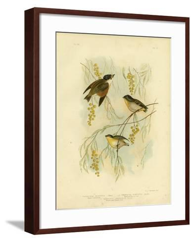 Spotted Diamondbird or Spotted Pardalote, 1891-Gracius Broinowski-Framed Art Print