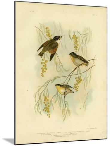 Spotted Diamondbird or Spotted Pardalote, 1891-Gracius Broinowski-Mounted Giclee Print