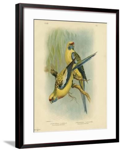 Yellow-Rumped Parakeet or Yellow Rosella, 1891-Gracius Broinowski-Framed Art Print