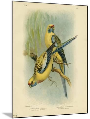 Yellow-Rumped Parakeet or Yellow Rosella, 1891-Gracius Broinowski-Mounted Giclee Print