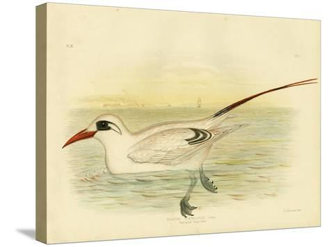 Red-Tailed Tropicbird, 1891-Gracius Broinowski-Stretched Canvas Print