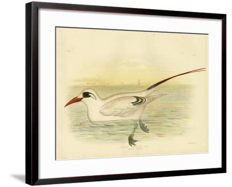 Red-Tailed Tropicbird, 1891-Gracius Broinowski-Framed Art Print