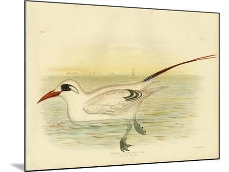 Red-Tailed Tropicbird, 1891-Gracius Broinowski-Mounted Giclee Print
