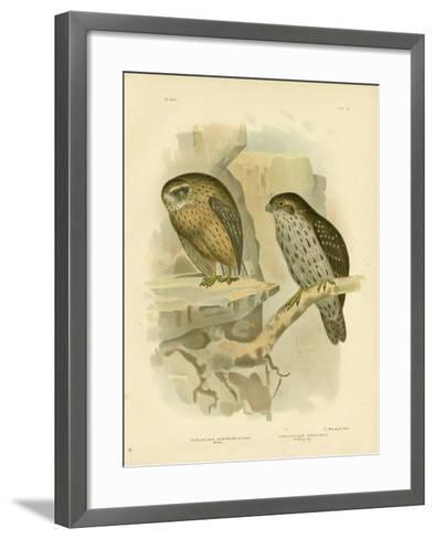 Wekau or Laughing Owl, 1891-Gracius Broinowski-Framed Art Print