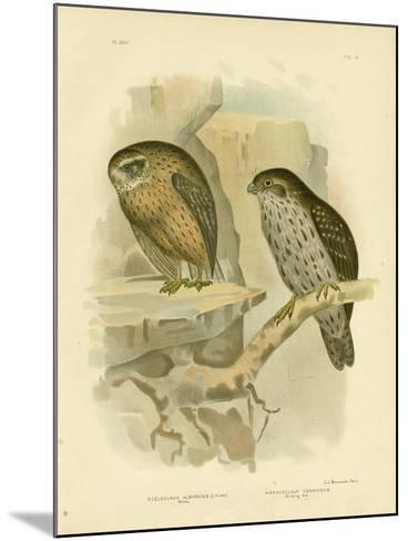 Wekau or Laughing Owl, 1891-Gracius Broinowski-Mounted Giclee Print