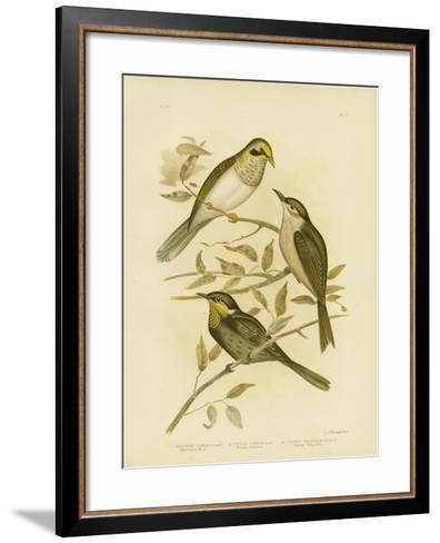 Yellow-Throated Miner, 1891-Gracius Broinowski-Framed Art Print