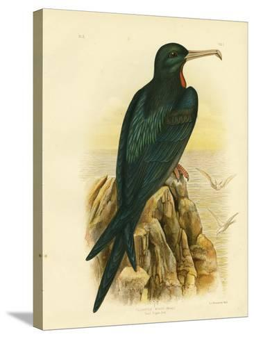 Frigate Bird, 1891-Gracius Broinowski-Stretched Canvas Print