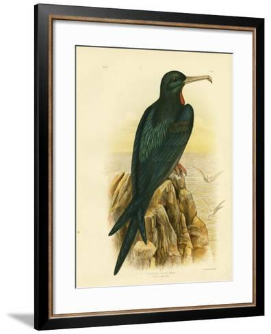 Frigate Bird, 1891-Gracius Broinowski-Framed Art Print