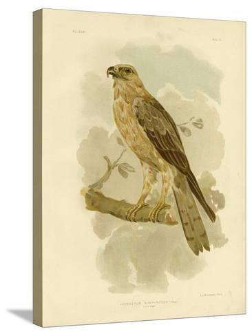 Little Eagle, 1891-Gracius Broinowski-Stretched Canvas Print