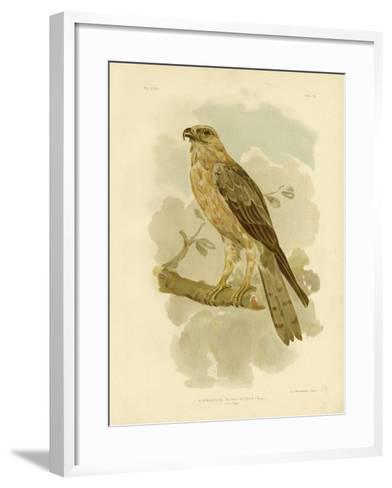 Little Eagle, 1891-Gracius Broinowski-Framed Art Print
