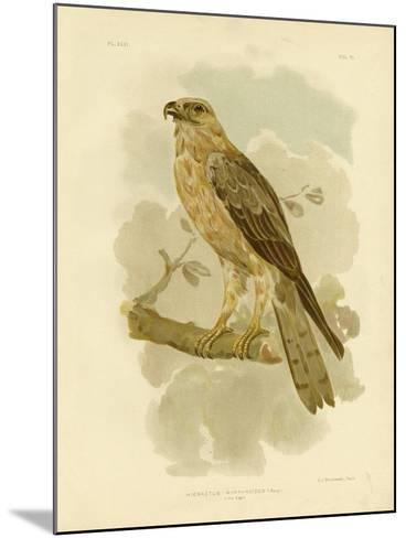 Little Eagle, 1891-Gracius Broinowski-Mounted Giclee Print