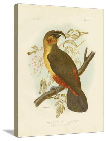 Norfolk Kaka, 1891-Gracius Broinowski-Stretched Canvas Print