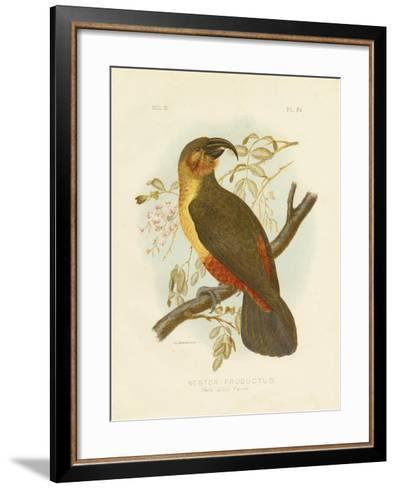 Norfolk Kaka, 1891-Gracius Broinowski-Framed Art Print