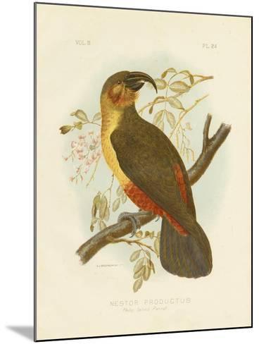 Norfolk Kaka, 1891-Gracius Broinowski-Mounted Giclee Print