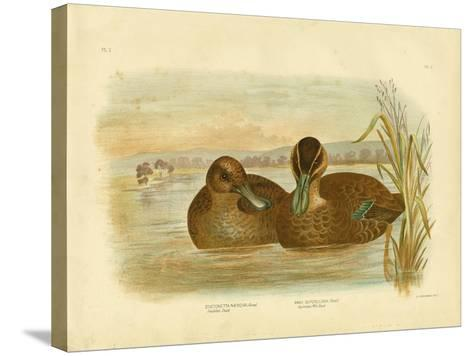 Australian Wild Duck, 1891-Gracius Broinowski-Stretched Canvas Print
