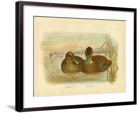 Australian Wild Duck, 1891-Gracius Broinowski-Framed Art Print