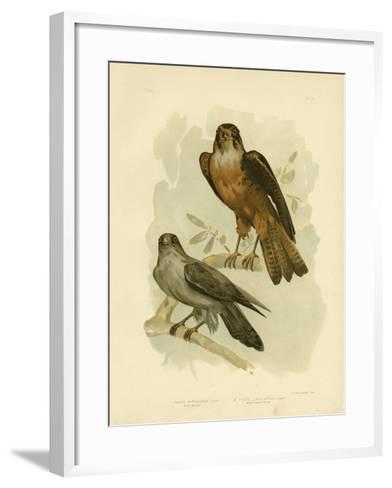 Grey Falcon, 1891-Gracius Broinowski-Framed Art Print