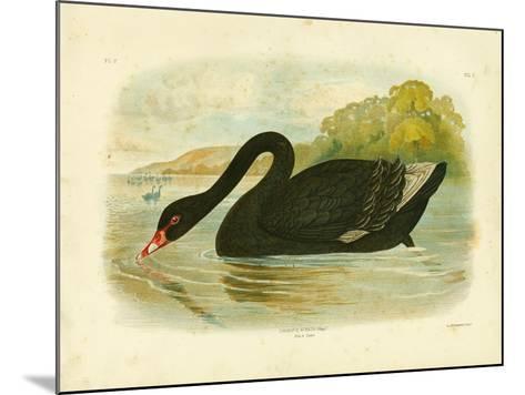 Black Swan, 1891-Gracius Broinowski-Mounted Giclee Print