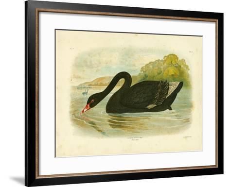 Black Swan, 1891-Gracius Broinowski-Framed Art Print