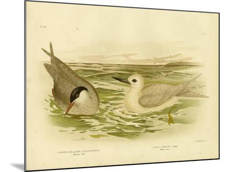 Marsh Tern, 1891-Gracius Broinowski-Mounted Giclee Print