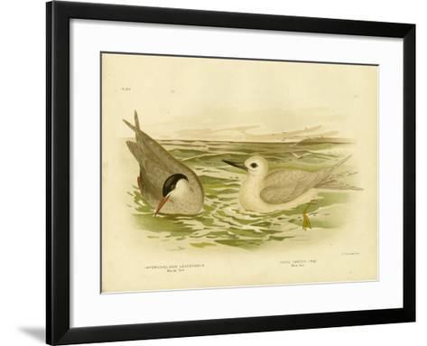Marsh Tern, 1891-Gracius Broinowski-Framed Art Print