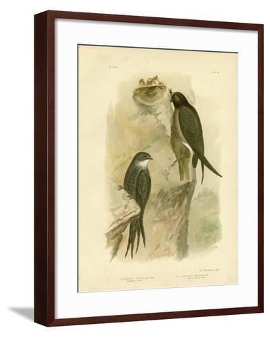 Australian Swift or Fork-Tailed Swift, 1891-Gracius Broinowski-Framed Art Print