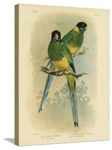 Bauer's Parakeet or Port Lincoln Lory, 1891-Gracius Broinowski-Stretched Canvas Print