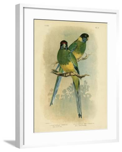 Bauer's Parakeet or Port Lincoln Lory, 1891-Gracius Broinowski-Framed Art Print