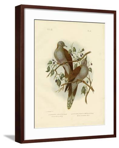 Crested Bronze Wing or Crested Pigeon, 1891-Gracius Broinowski-Framed Art Print