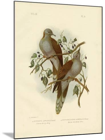 Crested Bronze Wing or Crested Pigeon, 1891-Gracius Broinowski-Mounted Giclee Print