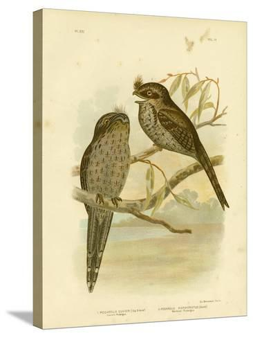 Cuvier's Podargus or Tawny Frogmouth, 1891-Gracius Broinowski-Stretched Canvas Print