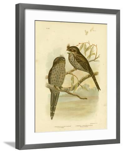 Cuvier's Podargus or Tawny Frogmouth, 1891-Gracius Broinowski-Framed Art Print