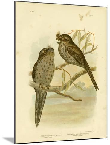 Cuvier's Podargus or Tawny Frogmouth, 1891-Gracius Broinowski-Mounted Giclee Print