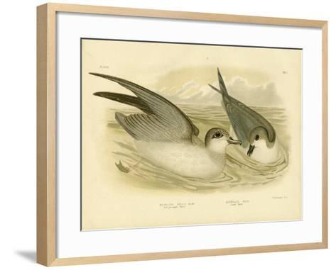 Soft-Plumaged Petrel, 1891-Gracius Broinowski-Framed Art Print