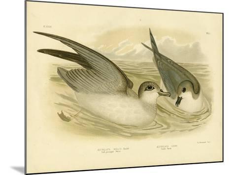 Soft-Plumaged Petrel, 1891-Gracius Broinowski-Mounted Giclee Print