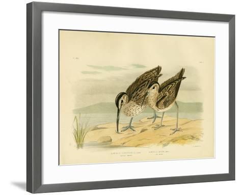 Australian Whimbrel, 1891-Gracius Broinowski-Framed Art Print