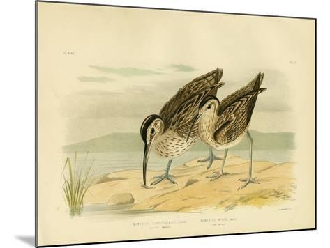 Australian Whimbrel, 1891-Gracius Broinowski-Mounted Giclee Print