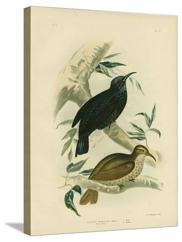 Rifle-Bird, 1891-Gracius Broinowski-Stretched Canvas Print
