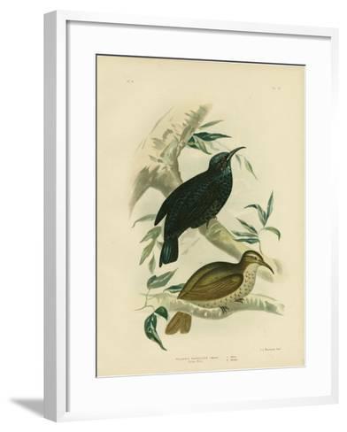 Rifle-Bird, 1891-Gracius Broinowski-Framed Art Print